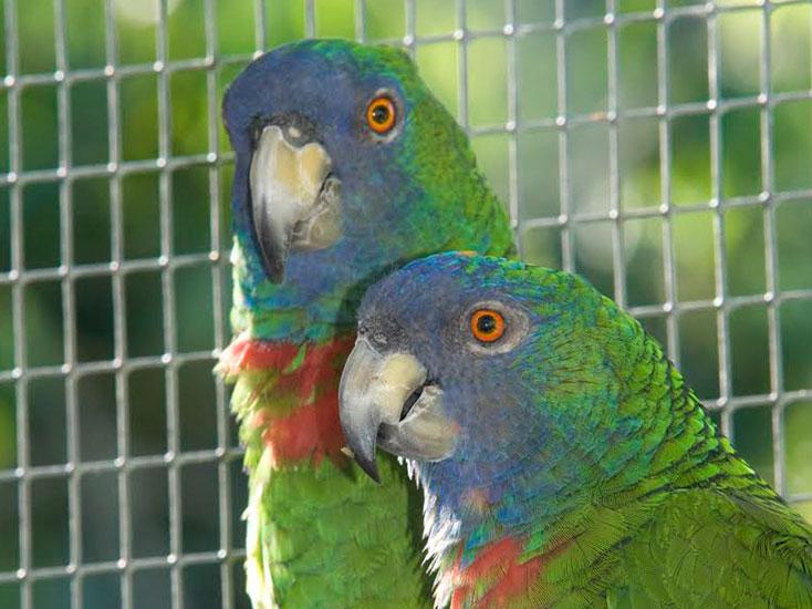 birds of dominica birdwatching in dominica eastern caribbean birds